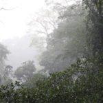 10 интересных фактов о растениях лесных зон