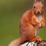 10 интересных фактов о животных лесных зон