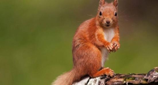 Интересные факты о животных лесных зон