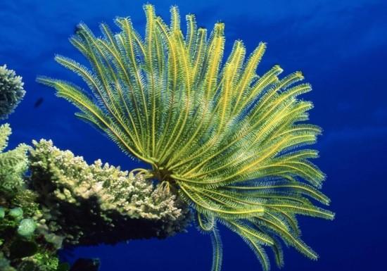 Интересные факты о морских лилиях