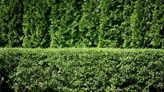 Интересные факты о листьях