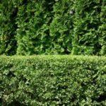15 интересных фактов о листьях