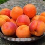 15 интересных фактов об абрикосах