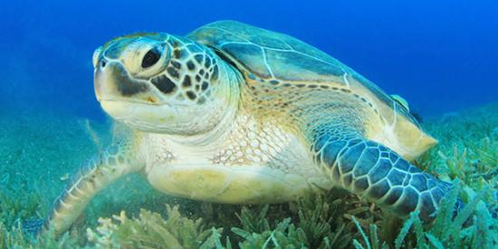 Интересные факты о морских черепахах