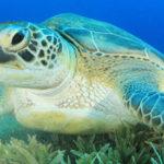 17 интересных фактов о морских черепахах