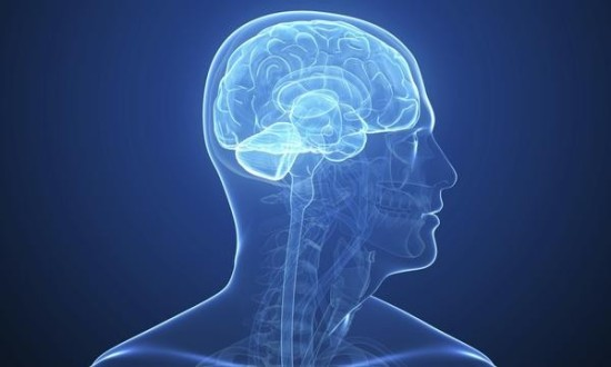 Факты о нервной системе человека
