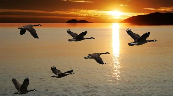 Интересные факты о перелетных птицах