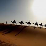 30 интересных фактов о верблюдах