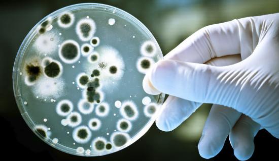 Интересные факты о бактериях