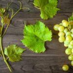 20 интересных фактов о винограде