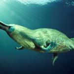 20 интересных фактов об утконосах
