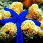20 интересных фактов о морских звёздах