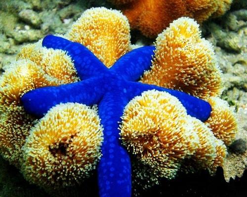 факты о морских звёздах