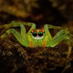 31 интересный факт о пауках