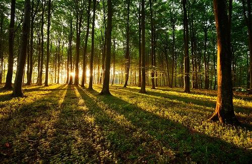 факты о лесах