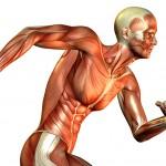18 интересных фактов о мышцах