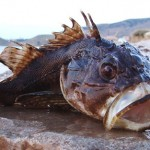 13 интересных фактов о животных Чёрного моря