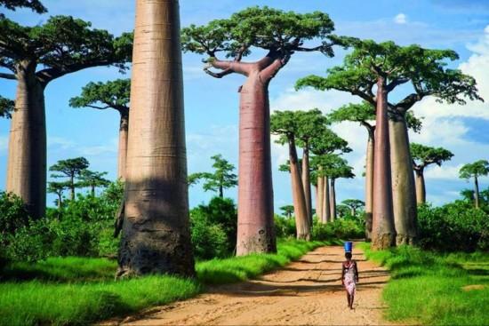 26 интересных фактов о Мадагаскаре
