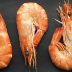 22 интересных факта о креветках