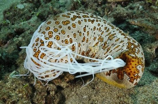 Интересные факты о морских огурцах