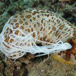 22 интересных факта о морских огурцах