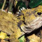 22 интересных факта о рептилиях