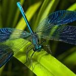 22 интересных факта о стрекозах