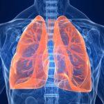 25 интересных фактов о дыхательной системе человека