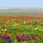 25 интересных фактов о Калмыкии