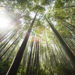 25 интересных фактов о бамбуке