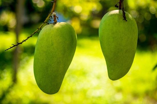 Факты о манго