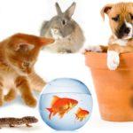 27 интересных фактов о домашних животных