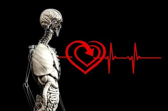 Факты о сердце человека