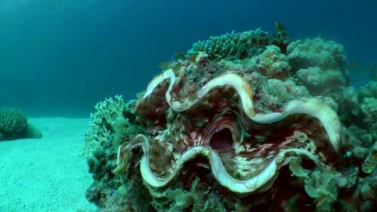 Интересные факты о моллюсках