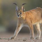 45 интересных фактов о диких животных