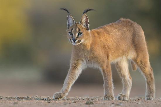 Интересные факты о диких животных
