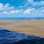 8 интересных фактов о Саргассовом море