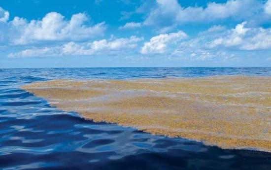 Факты о Саргассовом море