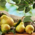 8 интересных фактов о грушах