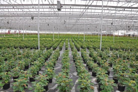 Интересные факты о культурных растениях
