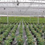 9 интересных фактов о культурных растениях