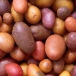 15 интересных фактов о картофеле