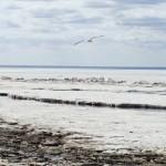 12 интересных фактов о Белом море