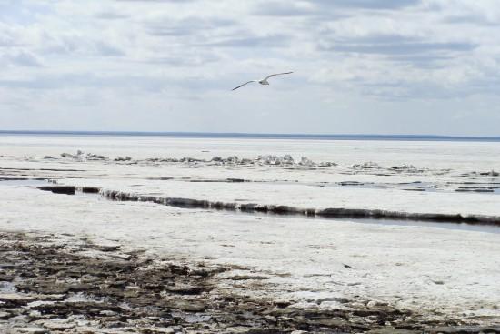 Факты о Белом море