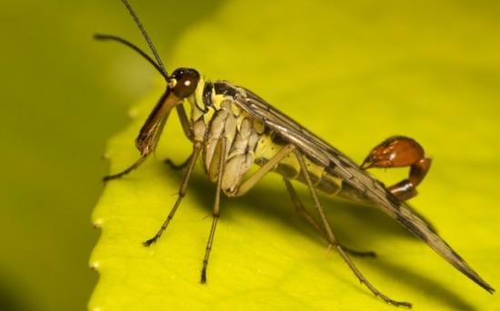 Факты о насекомых