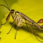 25 интересных фактов о насекомых