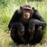 10 интересных фактов об обезьянах