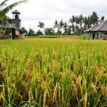 Что такое аграрная цивилизация