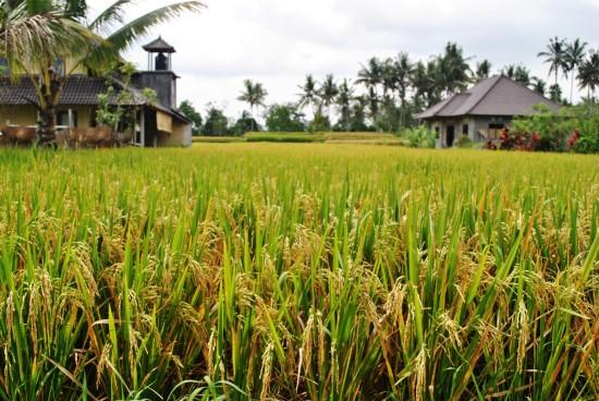 Аграрная цивилизация