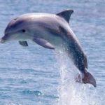 15 интересных фактов о дельфинах